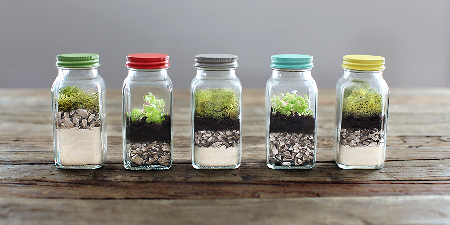 Earth Day Craft DIY Terrarium